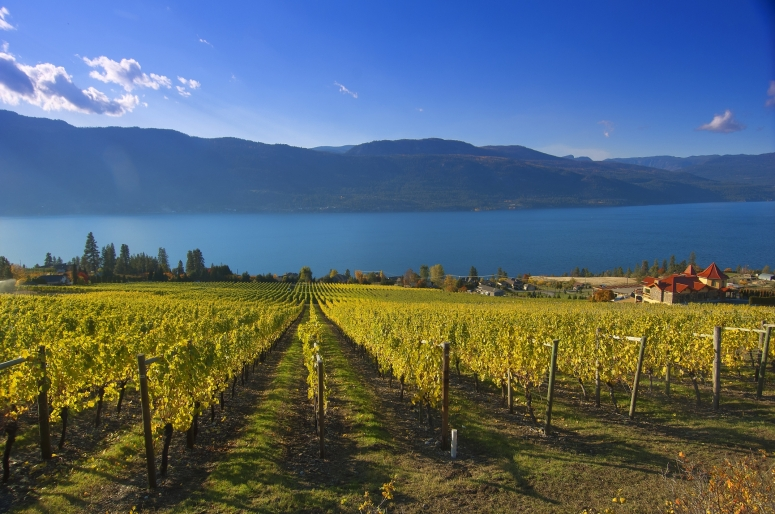 Gray Monk vineyard looking west over Okanagan Lake.